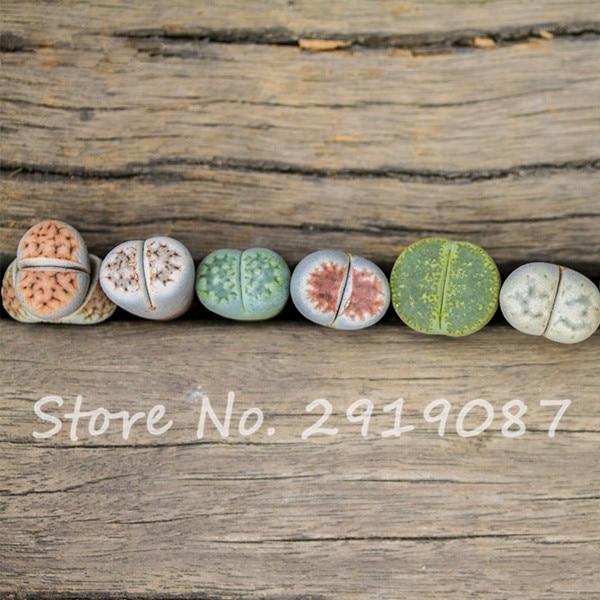 2017 New 100 Pcs Garden Decoration Lithops Seeds Living Stone Flower Seeds  Rare Succulent Seeds Home Garden Plant Seeds