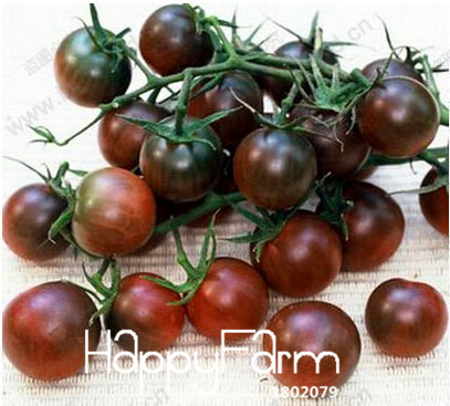 Hot Sale!Tomato seeds Organic chocolate tomato seeds, Purple pearl tomatoes seeds, Potted fruit and vegetables – 20 Seeds/lot,#Z