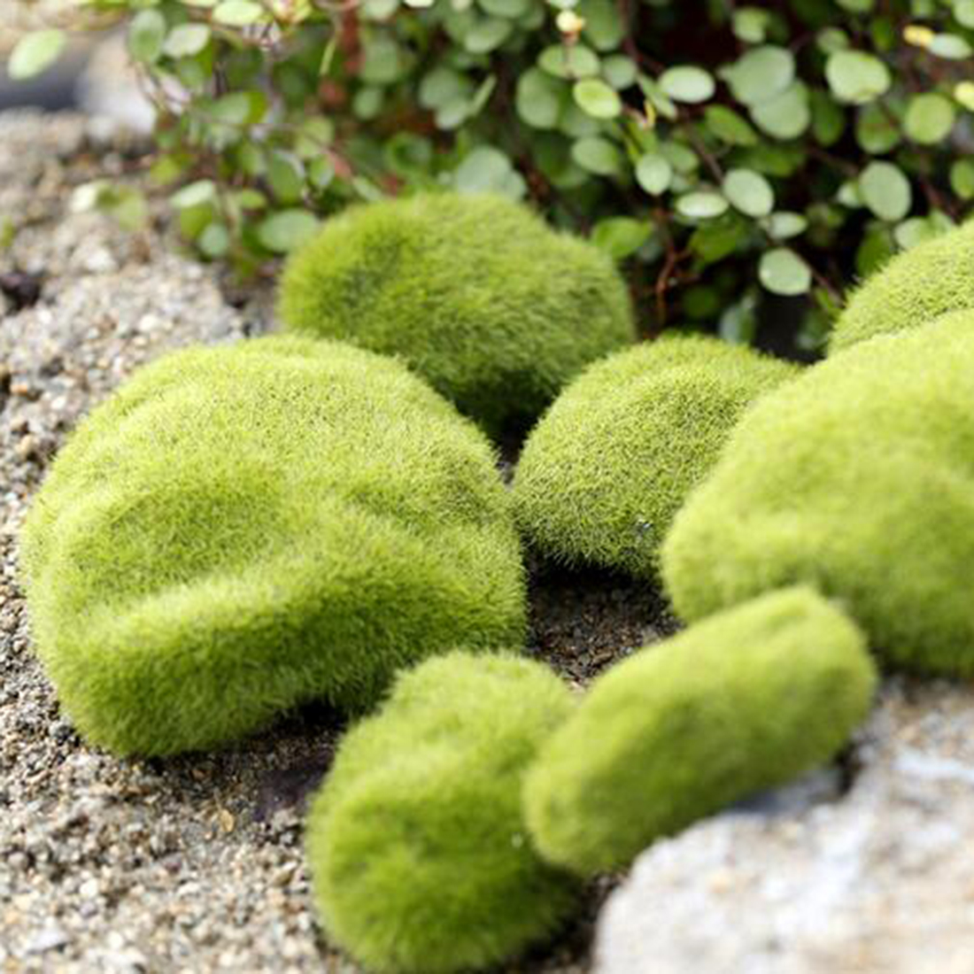 Decorative garden ornaments - Hot Selling Green Moss Stone Garden Ornaments For Bonsai Display Nature Moss Stone For Micro Landscape