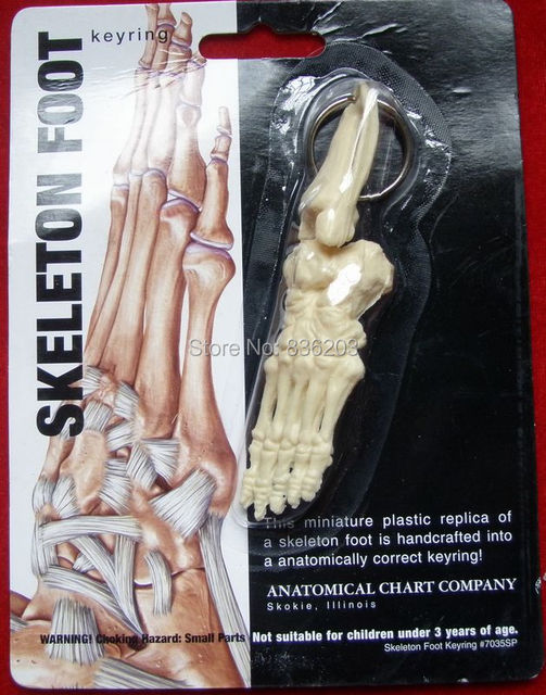 Mini Weibliche anatomie Menschlichen fußes modell skeleton kehle ...
