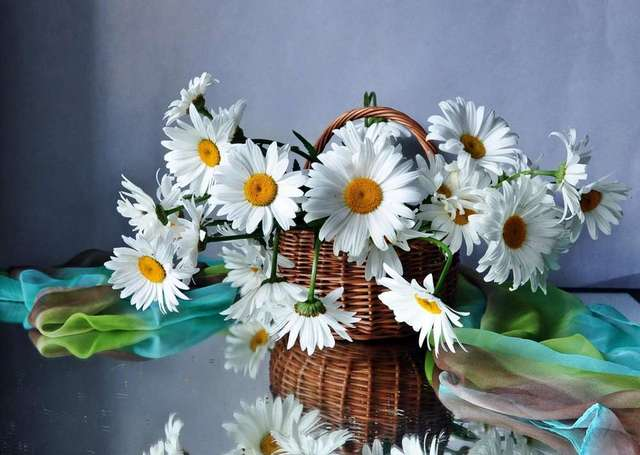 Birthday gift daisies flowers basket drops scarf reflection buy birthday gift daisies flowers basket drops scarf reflection buy flowers still life canvas painting hd prints negle Choice Image