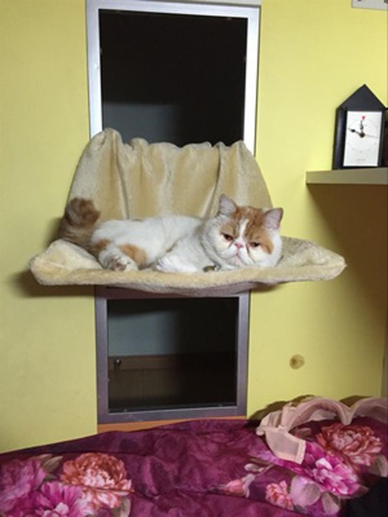 Hot Deluxe Amovible Fenêtre Seuil Chat Radiateur Lit Hamac Perche Salon De Siège Pet Kitty Suspendus Lit Confortable Chat Hamac
