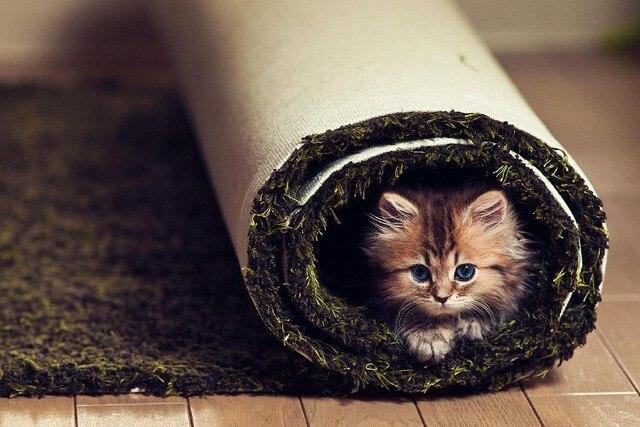 Dieren katten kittens leuke spar gezicht snorharen ogen tapijt humor grappig dier poster stof - Ogen grappig ...
