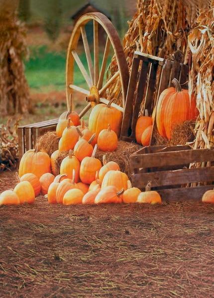 Custom vinyl cloth print autumn Halloween field photographic backgrounds for children party portrait photo backdrop F-1296