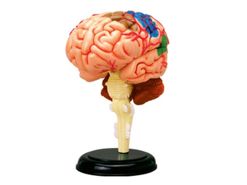 BOHS Menschlichen Körper Skelett Anatomie Schädel Puppe Anatomie ...