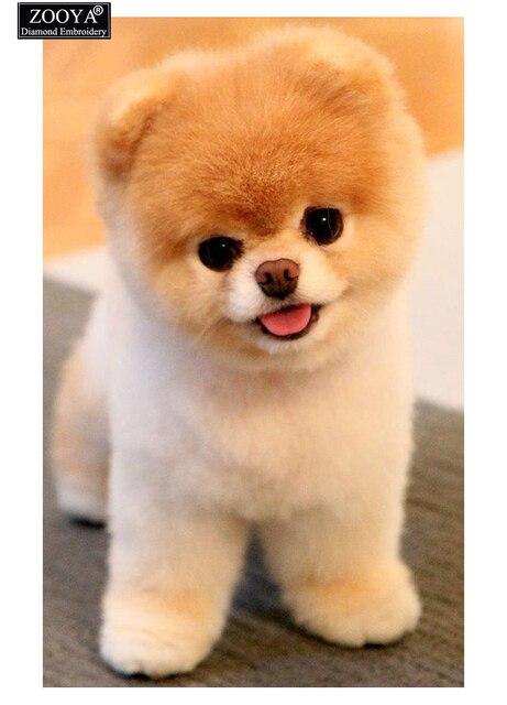 US $12 37 |Diamond Painting Cross Stitch Animals Pomeranian Dog 5D Diy Full  Square Diamond Embroidery Crafts Mosaic Home Decor Picture-in Diamond