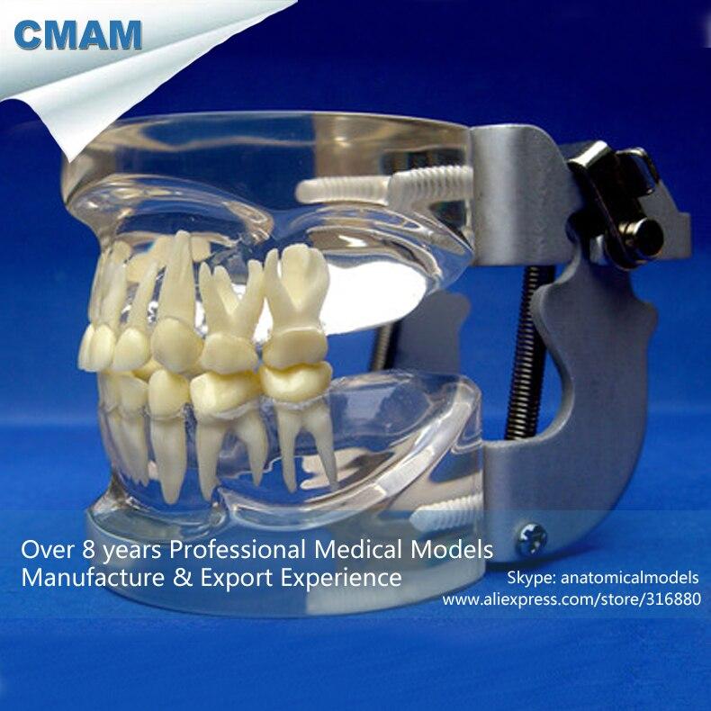CMAM-DENTAL15 All-transparent Deciduous Dentition Model cmam dental16 child dental education 3 6 age graghically developing model