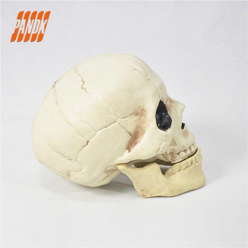 Halloween Schädel Kunststoff Lebensgröße Realistische Schädel Prop ...