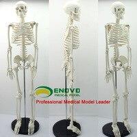 Medical Standard 85cm Human Body Skeleton Model Manikin