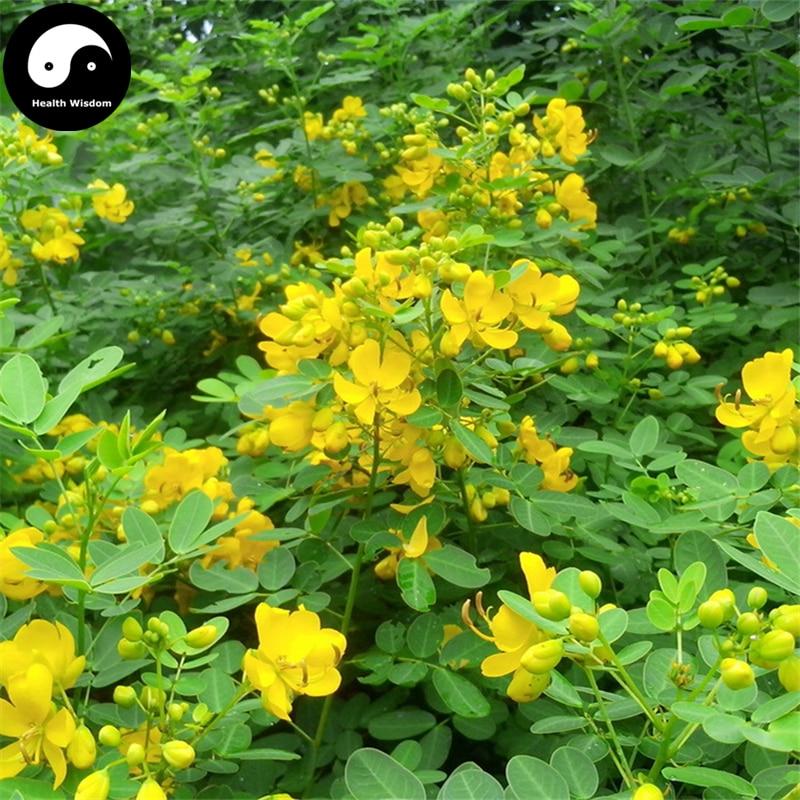 buy-cassia-semente-200pcs-plant-herb-sickle-font-b-senna-b-font-for-cao-jue-ming-zi
