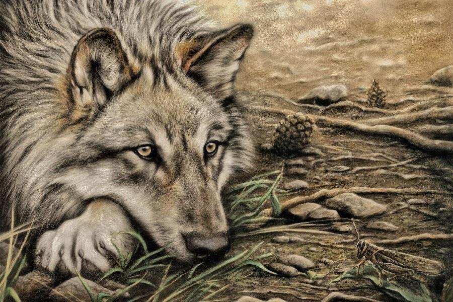 ᗛDIY marco animal salvaje del lobo estilo boceto arte seda Telas ...