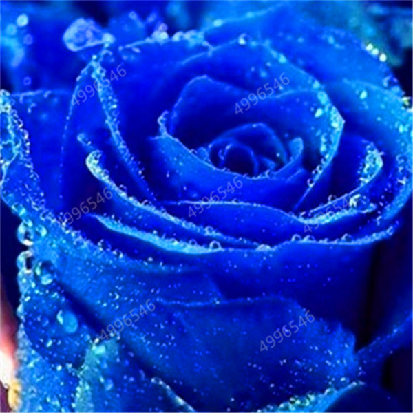 500-pcs-rose-flower-petunia-Cockscomb-Hibiscus-flower-rosas-bonsai-for-home-garden-Eustoma-flower-Natural.jpg_640x640