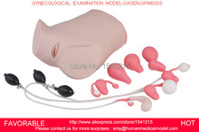 GYNECOLOGICAL TRAINING SIMULATOR, GYNECOLOGICAL EXAMINATION MODEL,GYNECOLOGICAL EXAMINATION MODEL-GASEN-GPM0003