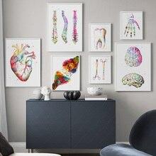 Анатомическое искусство, человеческое сердце, легкие мозги, настенное искусство, холст, живопись, скандинавские плакаты и принты, настенные картины для доктора, офисный Декор