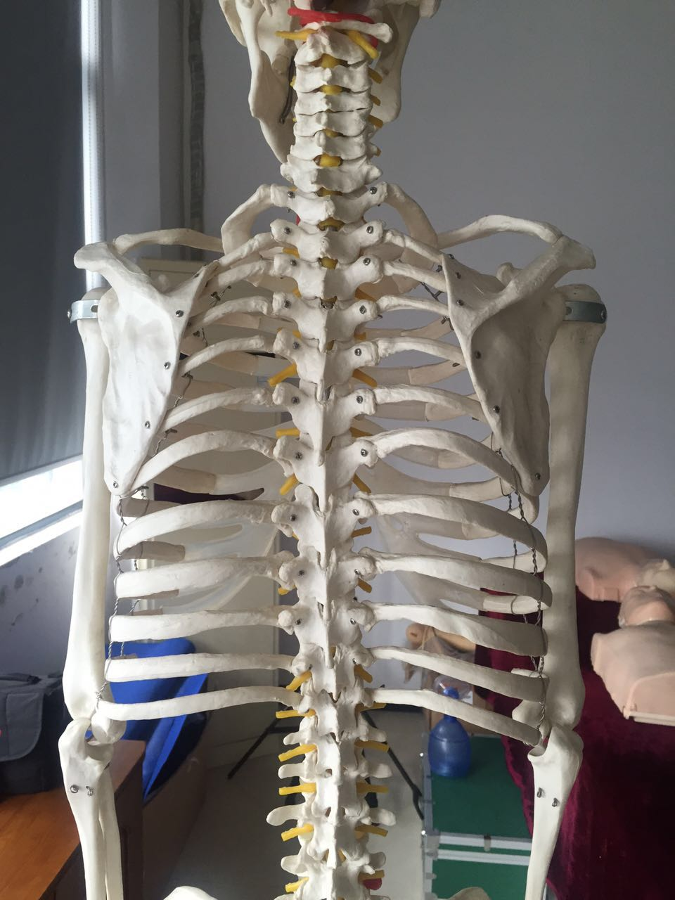 180cm Skeleton Back (3)
