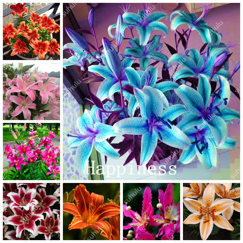 200 Pcs Rare Lily Not Lily Bulbs It Is Bonsai Cheap Lilum Flower Outdoor Perennial Pleasant Fragrance Plants For Home & Garden