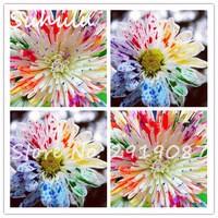 50seeds-bag-Rare-Watercolor-Chrysanthemum-Seeds-Lovely-rainbow-watercolor-Chrysanthemum-For-Home-Garden-Planting.jpg_200x200