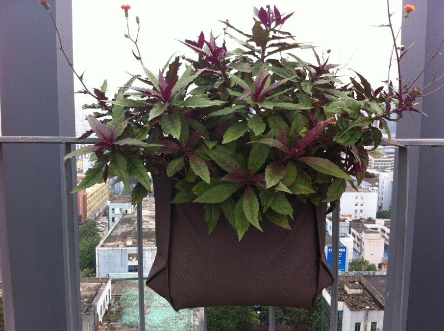 Verticale Tuin Zakken : Verticale tuin planter kweektent kweekruimte tas muur planter zak