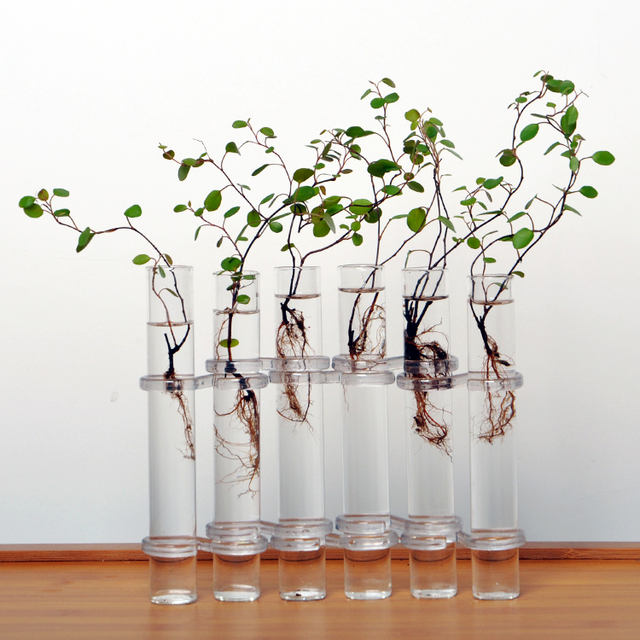 Clear 6 Tubes Shape Flower Glass Vase Bottle For Flower Plant Diy