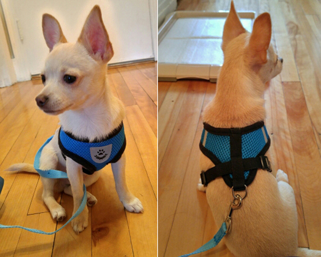 Breathable Mesh Small Pet Harness and Leash Set