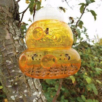 Trampa de avispas, moscas, insectos, insectos, trampa para miel colgante, matamoscas, sin veneno