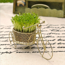 Creative Gifts home indoor Crop DIY Potted Bonsai heart-shaped bicycle grow plants wedding party gift