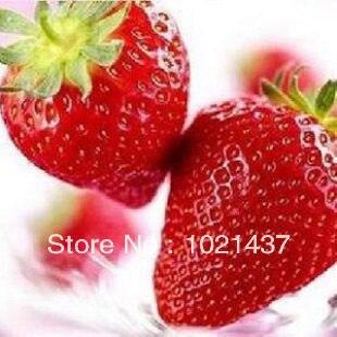 Online Get Cheap Garden Supplies Wholesale Aliexpresscom