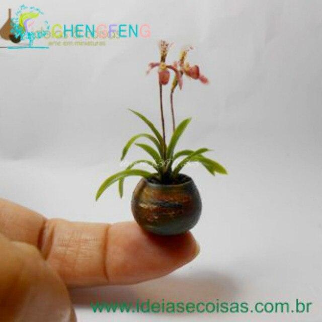 100pcs Seeds Mini Bonsai Orchid Seeds Indoor Home Miniature Flower Pot  Garden