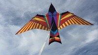 Пользовательские кайт 5 м Мощность животных воздушных змеев птицы кайт с ручкой и линии хорошо Летающий