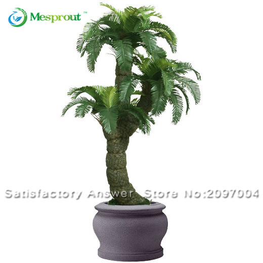 Cycas Plant Seeds Potted Seed Flower Seed For DIY Home Garden Household  Items 1 PCS Cycas Seeds /bag From Reliable Seeds Flower Seed Suppliers On  Mesprout ...