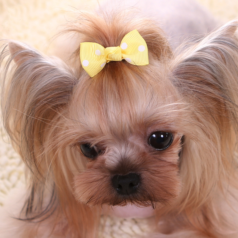 6/12pcs Newest Cute Pet Dog Cat Beauty Supplies Bows Hairpin Hair Clips Headdress Grooming Accessories