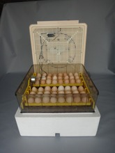 New full automatic Digital 220V poultry egg incubator 96 chicken egg hatching machine