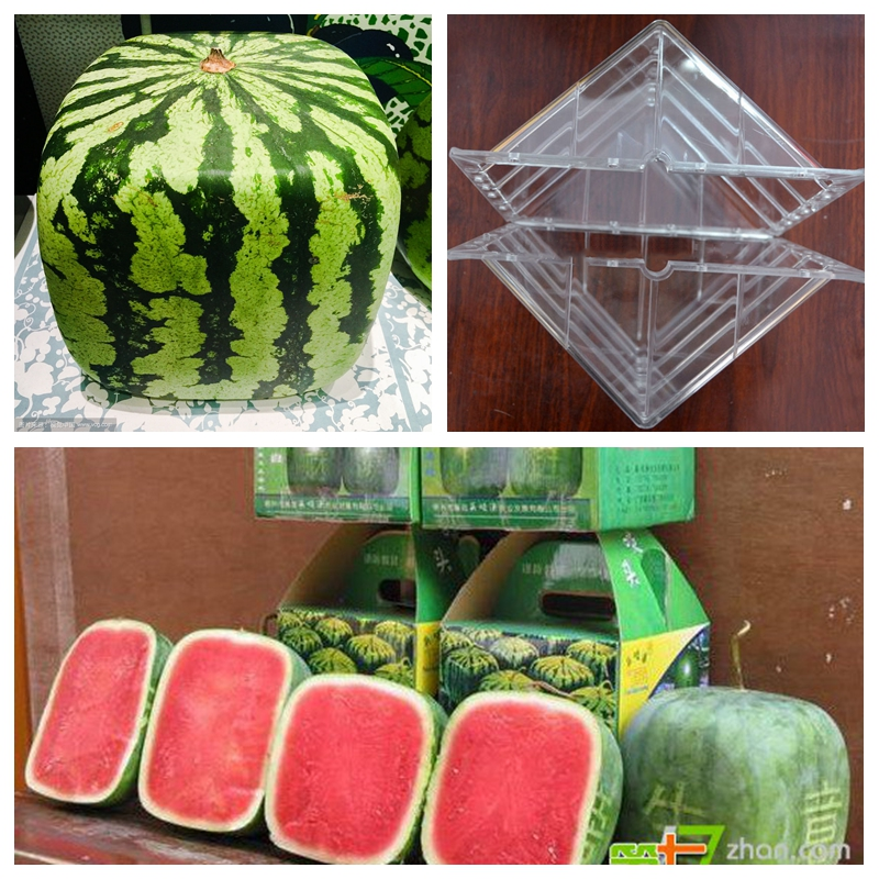 US $15 78 26% OFF|1PCS Large Size Plastic Heart Square Watermelon Growing  Mold Transparent Fruit Growth Forming Shaping Mould Garden Supplier-in
