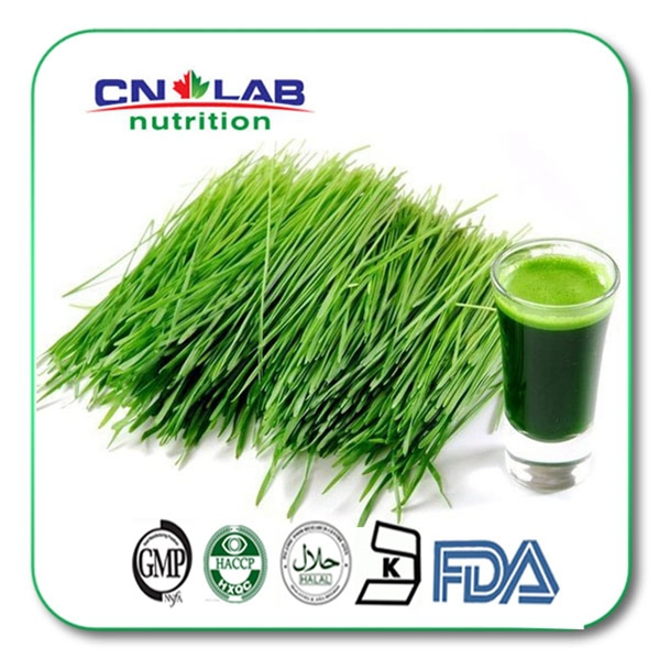 Bulk1kg Quality 100% Organically Farmed Supergreen Wheat Grass Powder for Health & Fitness High Fiber Diet 1000g 98% fish collagen powder high purity for functional food