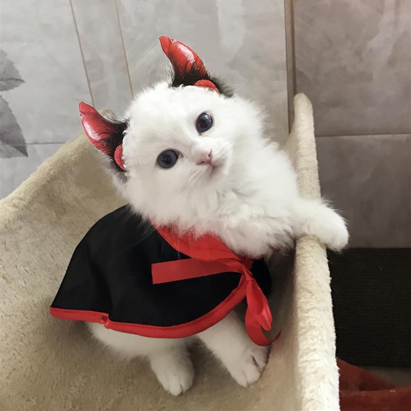 Halloween Vampire Cat Costumes  3