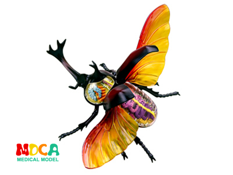 Celestial insect 4d master puzzle Assembling toy Animal Biology organ anatomical model medical teaching model hercules beetle 4d master puzzle assembling toy animal biology organ anatomical model medical teaching model
