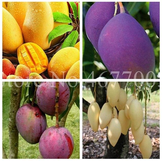 1 pçs/saco Mango Mini Mango Tree Árvore Em Vaso Bonsai Ao Ar Livre Flor Fruta Suculenta Vaso de Plantas Para Casa Jardim Da Herança Orgânica pot