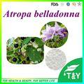 Atropa belladonna extrato 99% Escopolamina Pó 10g de Alta Qualidade