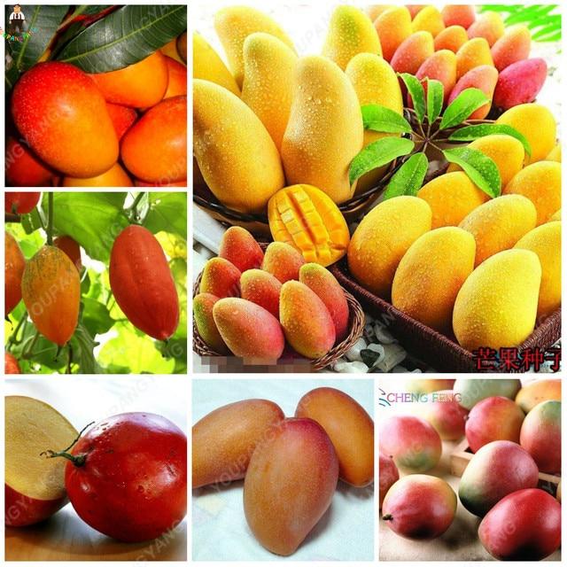 1 pz Mini Albero di Mango Bonsai Albero Bonsai Organico Frutta e Verdura di fior