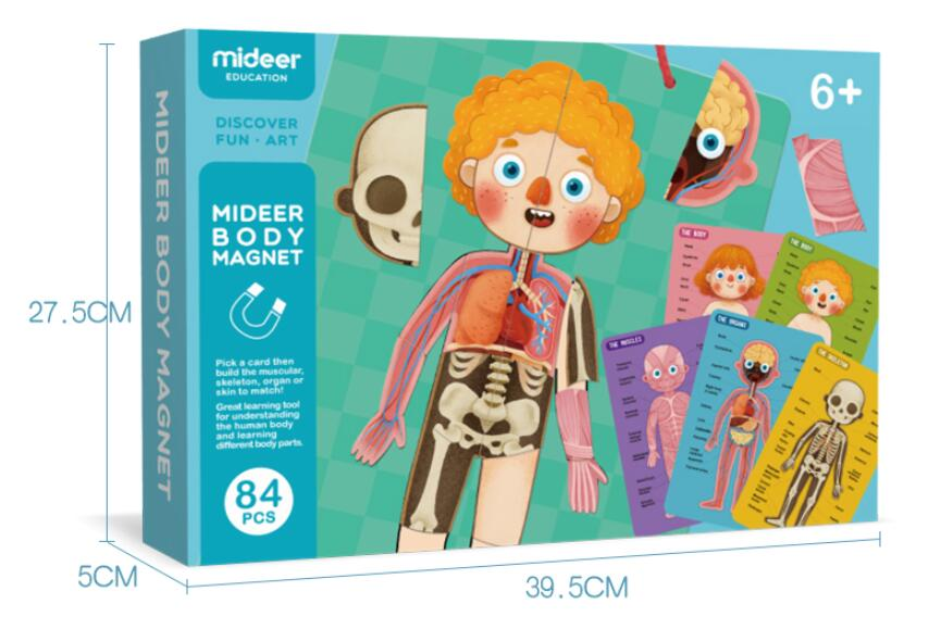 Jigsaw models of human organs Children's body parts cognition Magnetic hanging board English and Chinese instruction card Medical Science     - title=