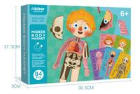 Jigsaw models of human organs Children's body parts cognition Magnetic hanging board English and Chinese instruction card