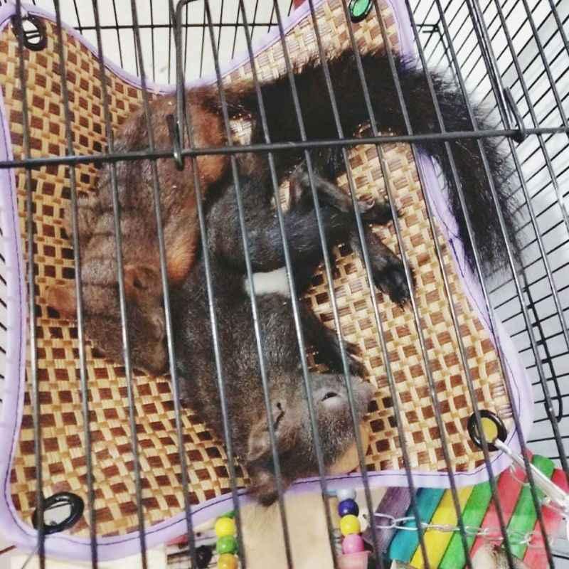 Попугай подвесная кровать коврик гамак для хомяка морская свинья клетка для Ежика Гнездо Дом качели игрушки