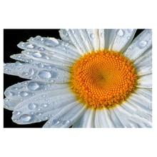 DIY Diamond Painting white Chrysanthemum Diamond Embroidery flower Chrysanthem Diamond Mosaic flower Cross Stitch Home Decor wharfedale diamond 240c white