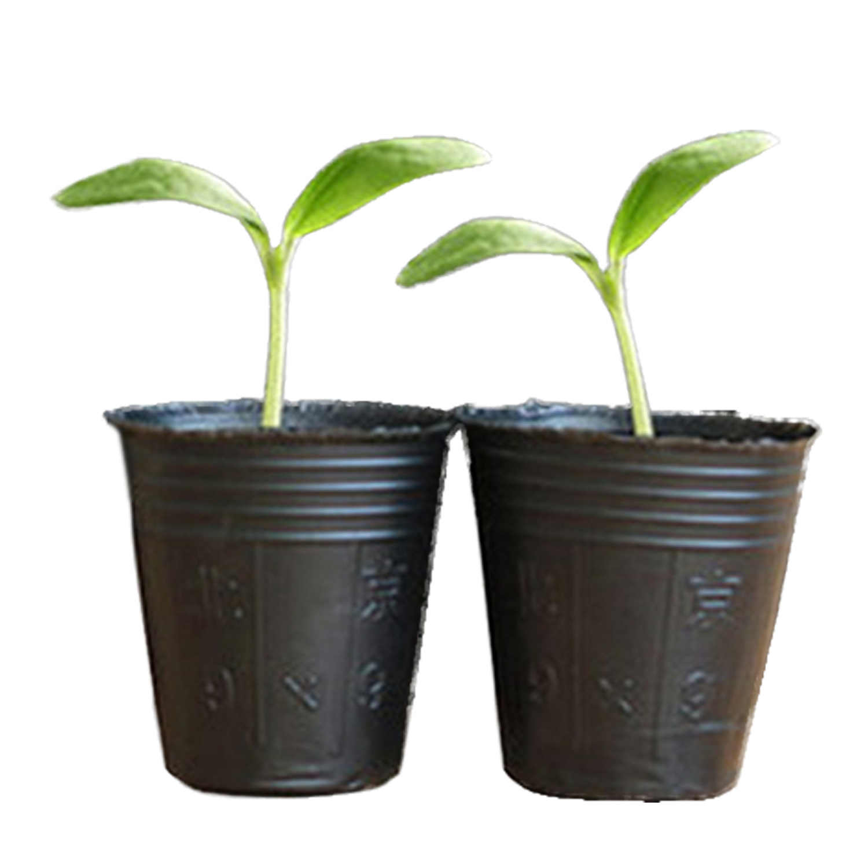 Behogar 100 pcs Sementes Da Planta Crescer Caixa Potes Berçário Bandeja de Inserção de Propagação de Semeadura Caso Vaso de Flores Nutrição Copo Fontes Do Jardim