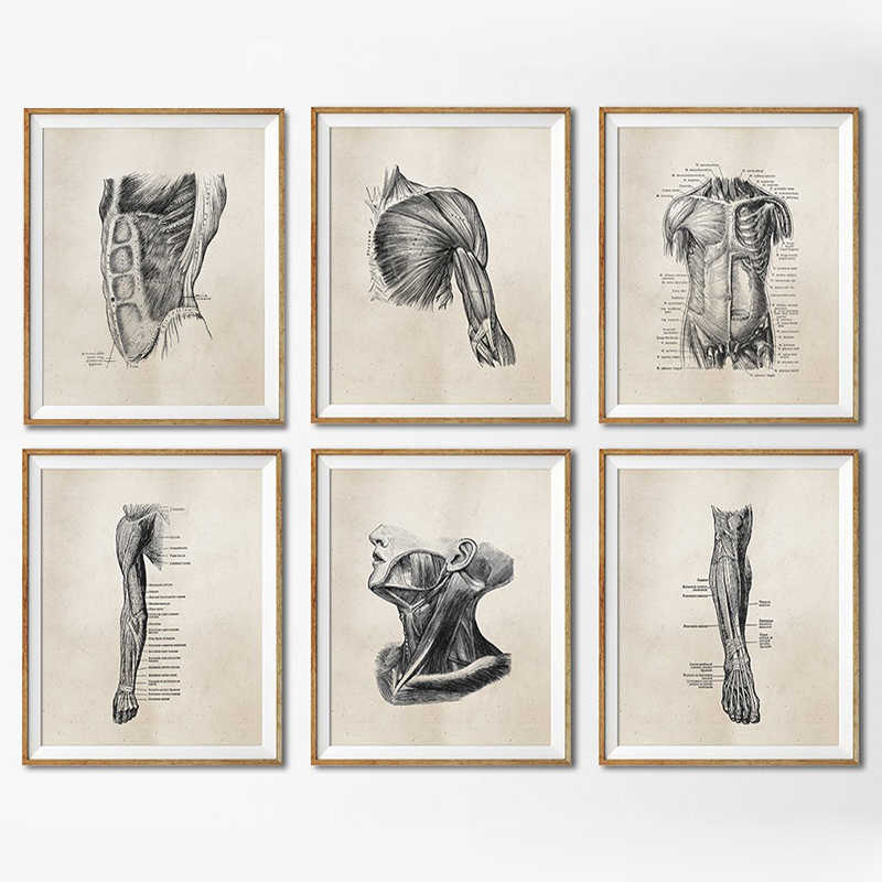 Human Anatomy Vintage Posters And Prints Doctor's Office Wall Decor Physiotherapis Medical Student Gift Poster Canvas Painting