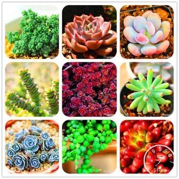Loss Promotion!99 Kinds Rare Succulents garden Lithops flores Pseudotruncatella Office Bonsai Plants Flower plantas 100 PCS/Pack