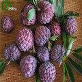 Açúcar apple sementes planta casa deliciosas sementes de frutas muito grande e doce para casa jardim planta 20 pcs l035