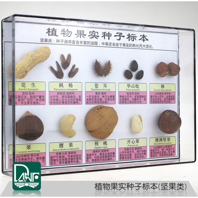 Specimen of plant fruit and seeds Ten kinds of  nut fruits  Science teaching specimen children gifts