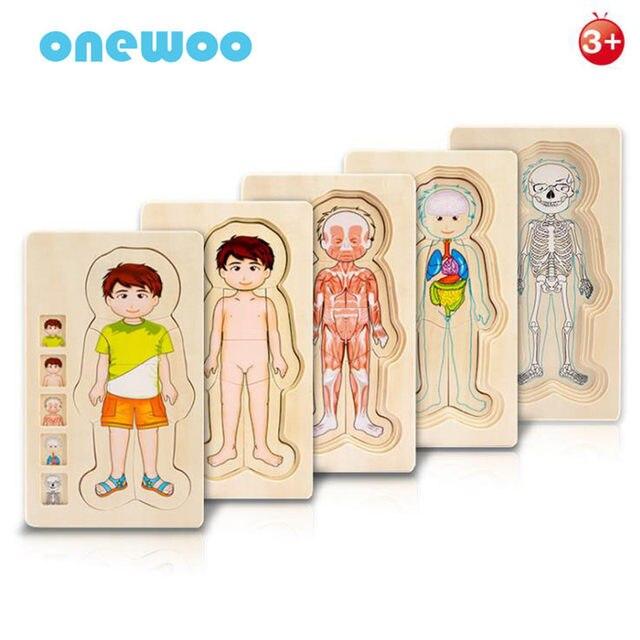 Online Shop Children Educational Toys Wooden Human Body Puzzle Boys