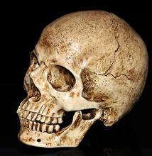 wholesale 19*11cm Mini gold skull Halloween head mannequin, resin skull, medical art, copying, drawing, sculpture ghost. M01008
